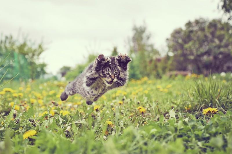 Kitten is jumping