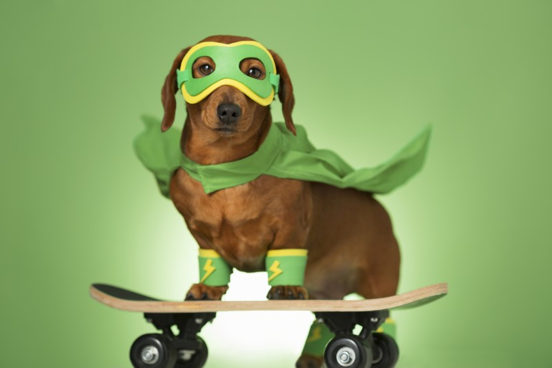 Masked superhero dog on a skateboard
