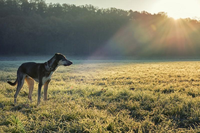Dog and winter sun