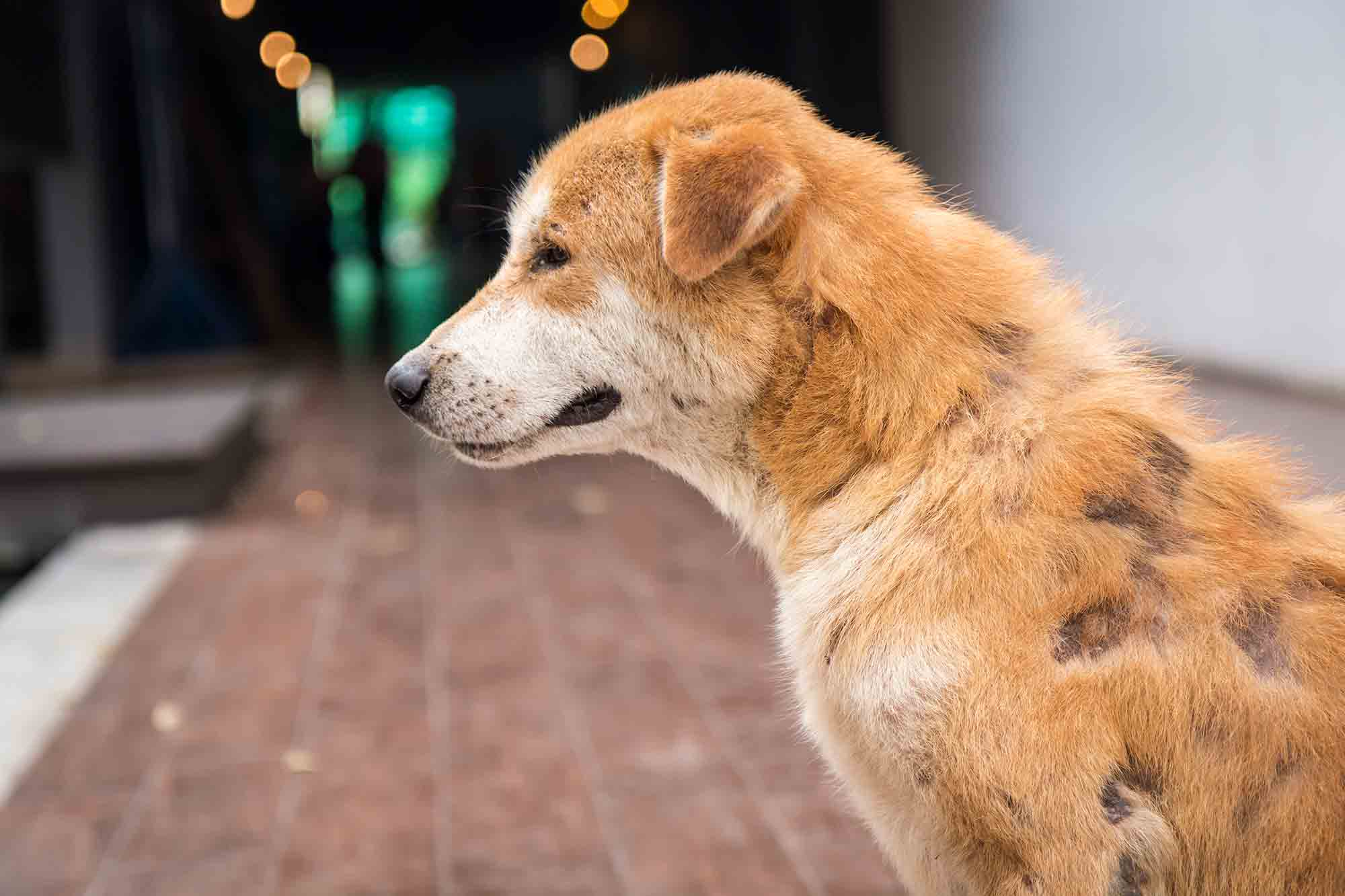 The Mystery Of Mange What Is It And How Is It Treated