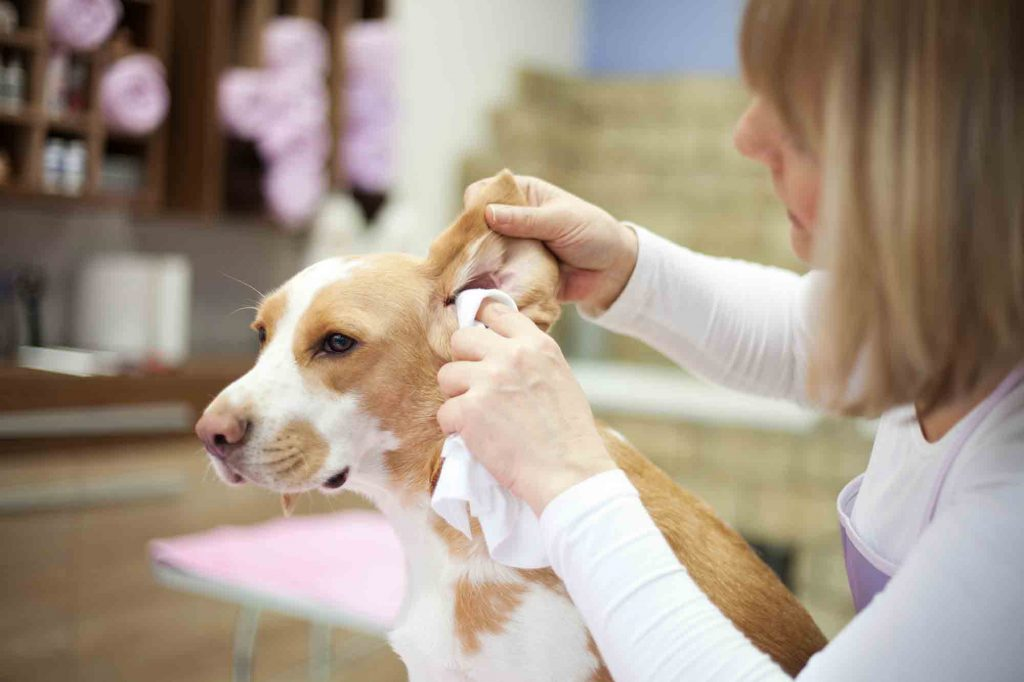 pet ear cleaning
