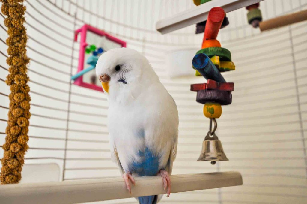 bird ownership