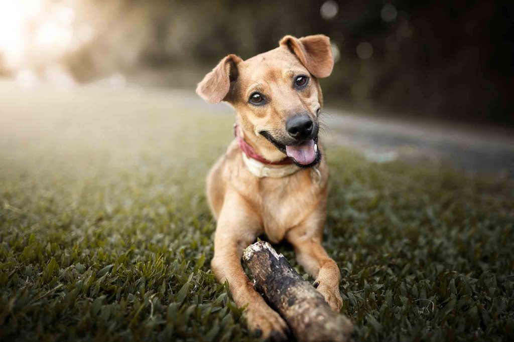 How do you make your dog's life better?