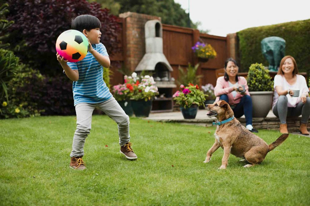 Summer pet safety starts in a pet-friendly yard