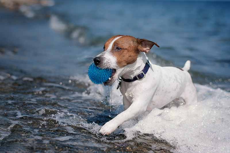 Dog water safety can make taking pets to the beach more fun.