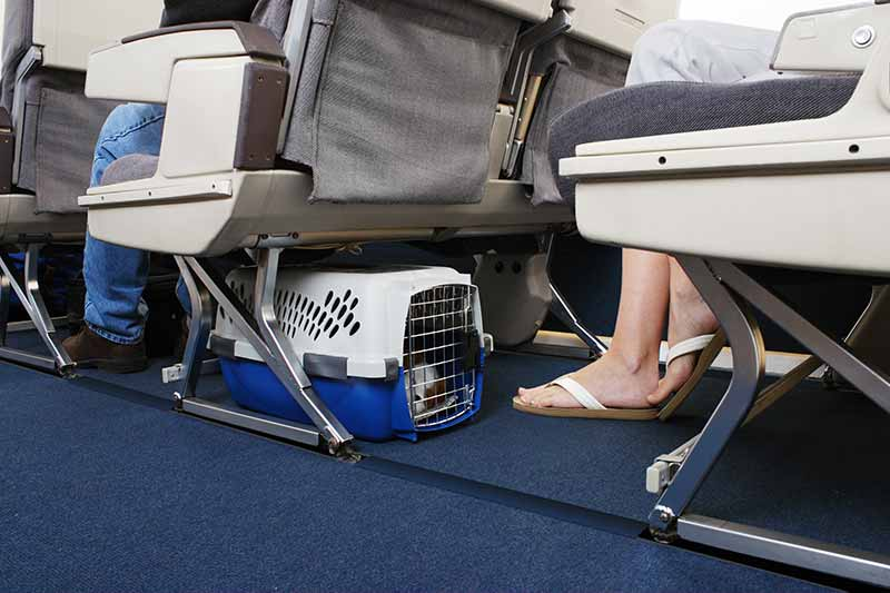 Pet carrier stowed under plane seat