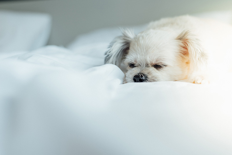 Canine influenza is a serious risk to pet health