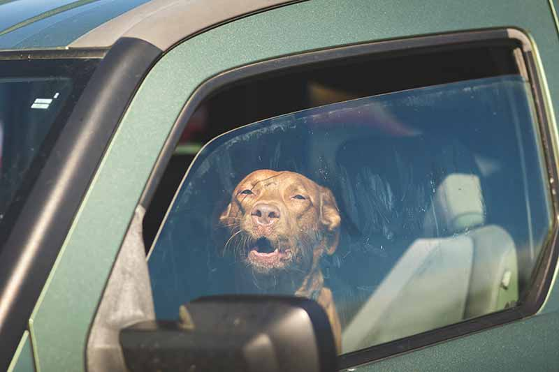 Pet heat stroke is a very serious threat to your pet's life