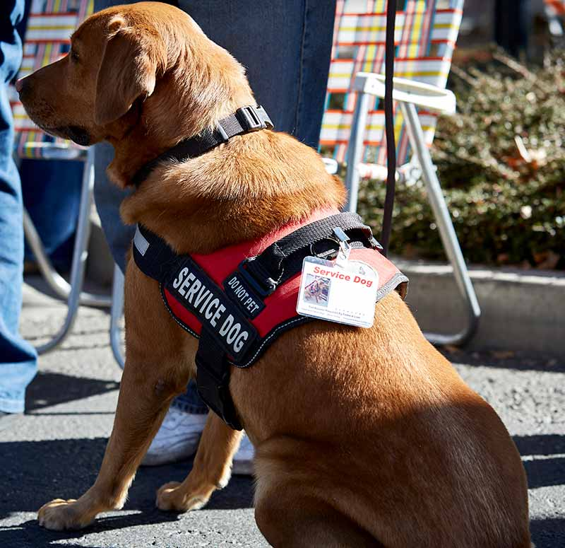 Service dog stigma can affect actual service dogs.