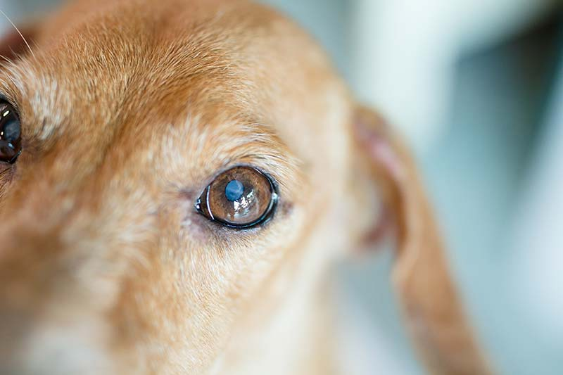A blind or deaf pet can live a full and happy life.