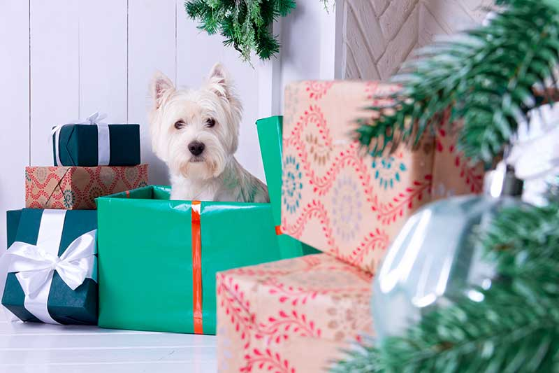 Getting a pet for Christmas requires responsible pet ownership considerations