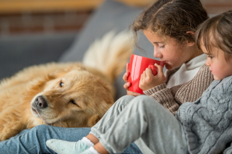 Pet-centered holiday movies can be a great way to celebrate the holidays with pets