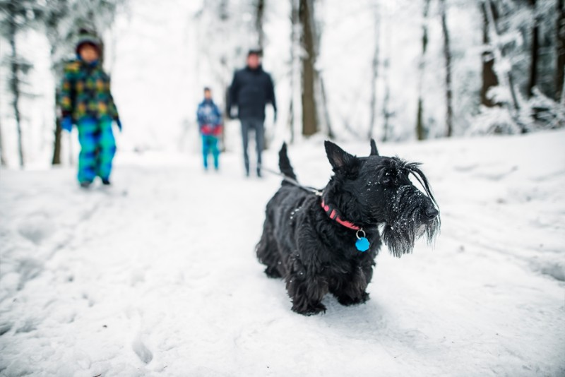 Resolutions for pet owners can benefit your pet!