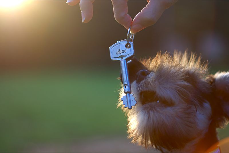 Pet-Friendly Rentals Archives - Beverly Hills Veterinary