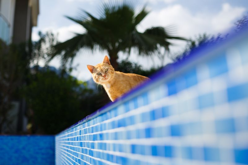 Pet safety: Cat at pool in Beverly Hills MI