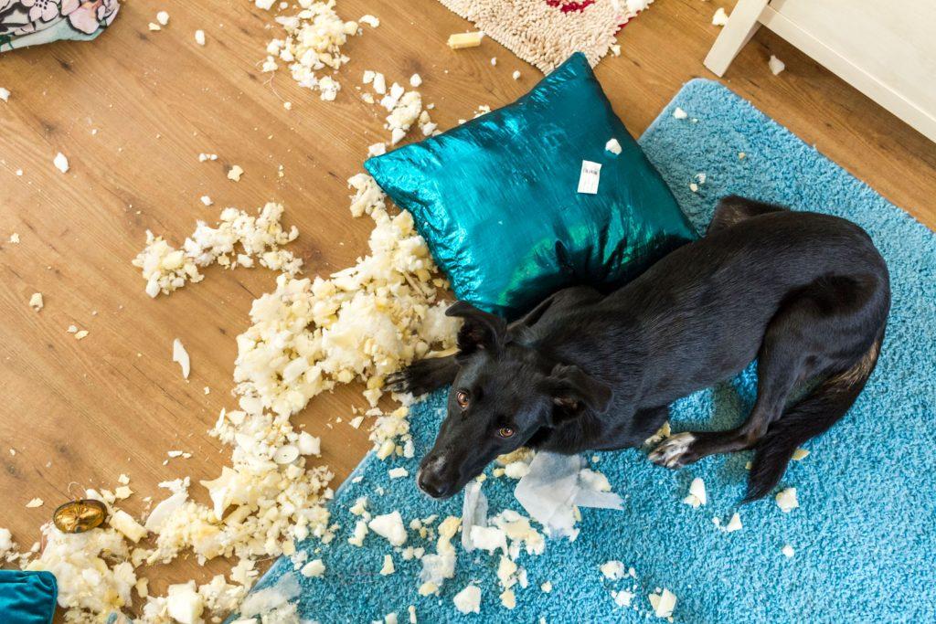 Bad Michigan dog tearing up pillow