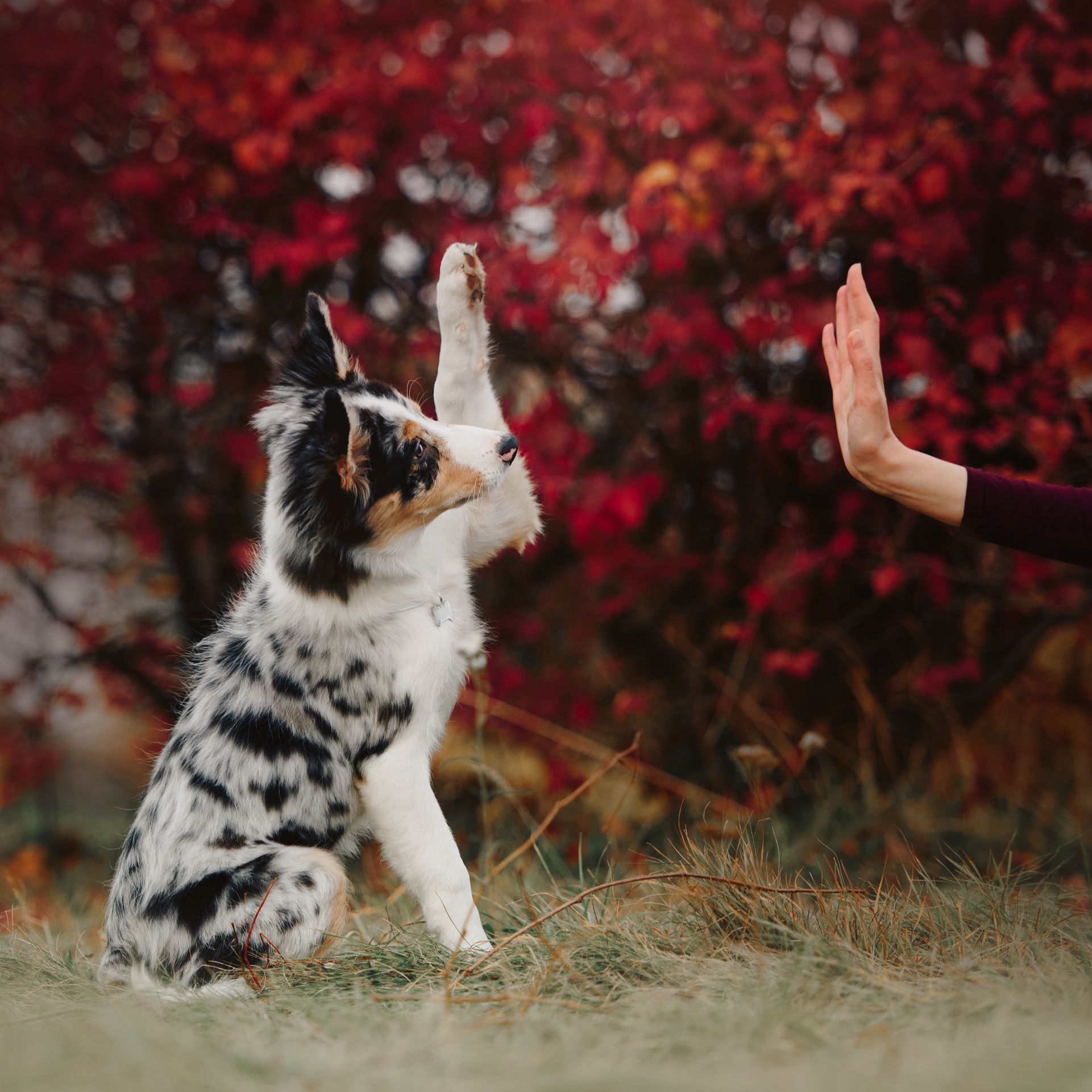 A pet gives a woman a high five.