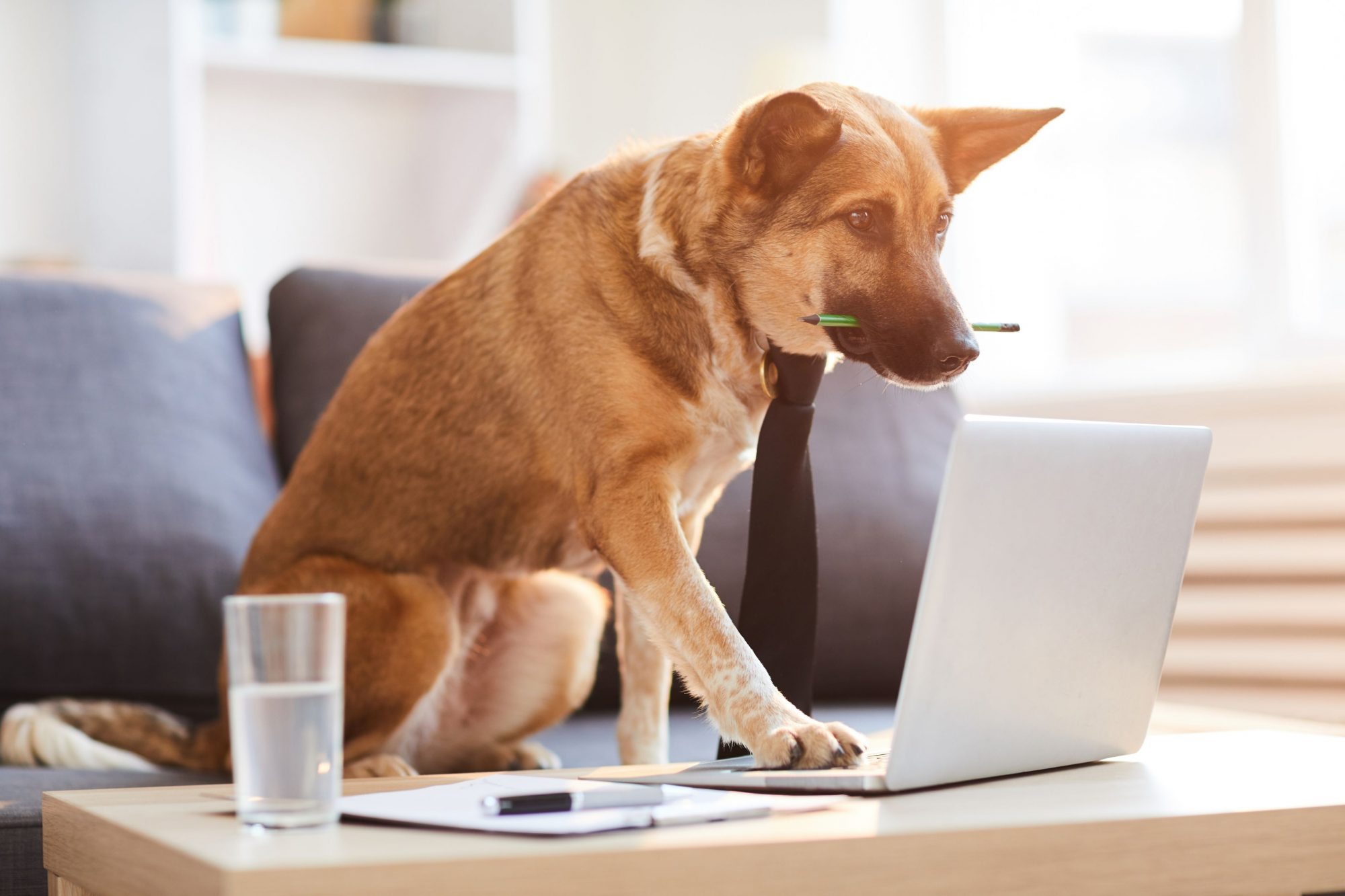 A dog in a tie presses on a laptop.