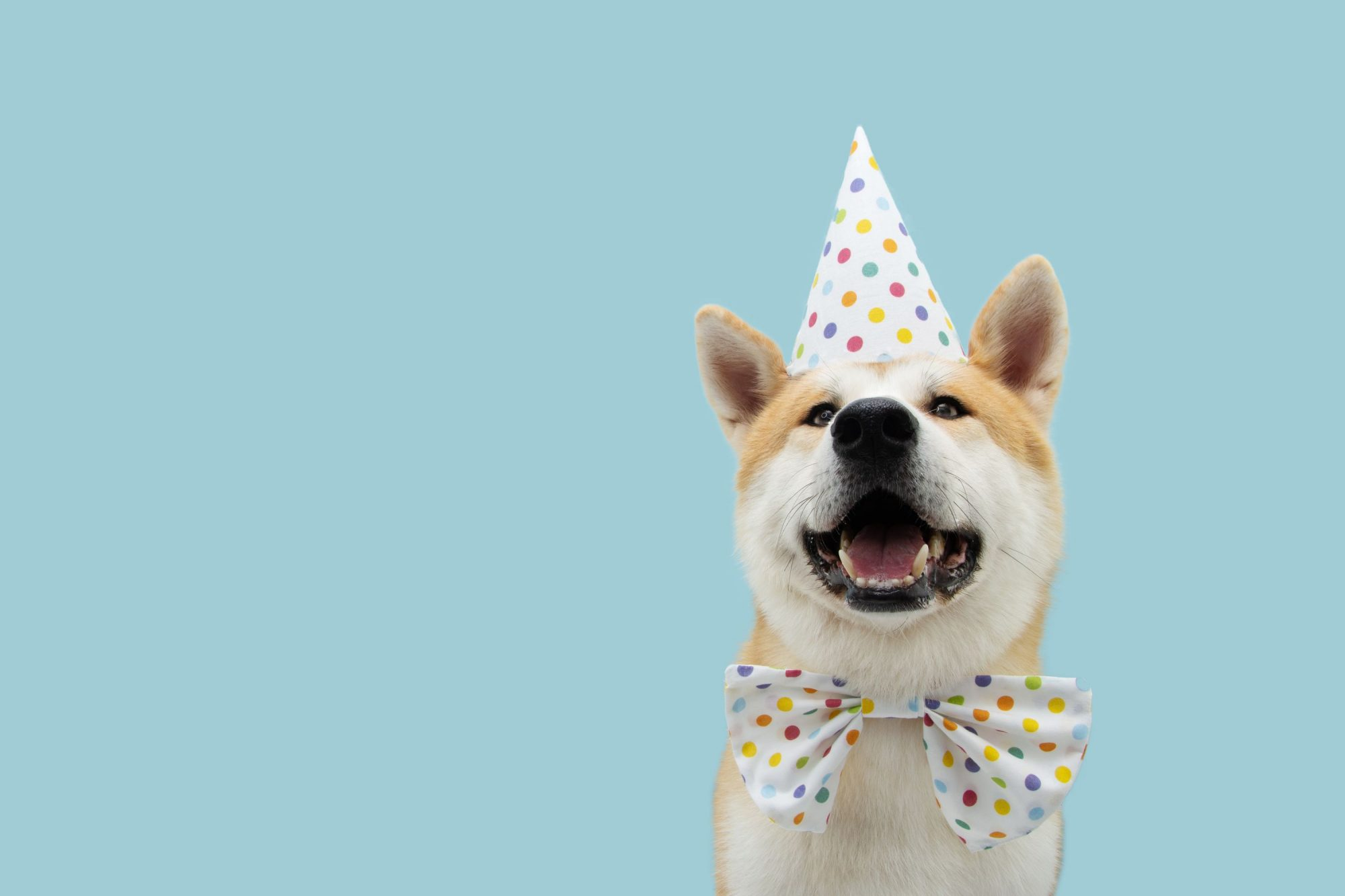 A dog in a party hat celebrating a pet birthday.