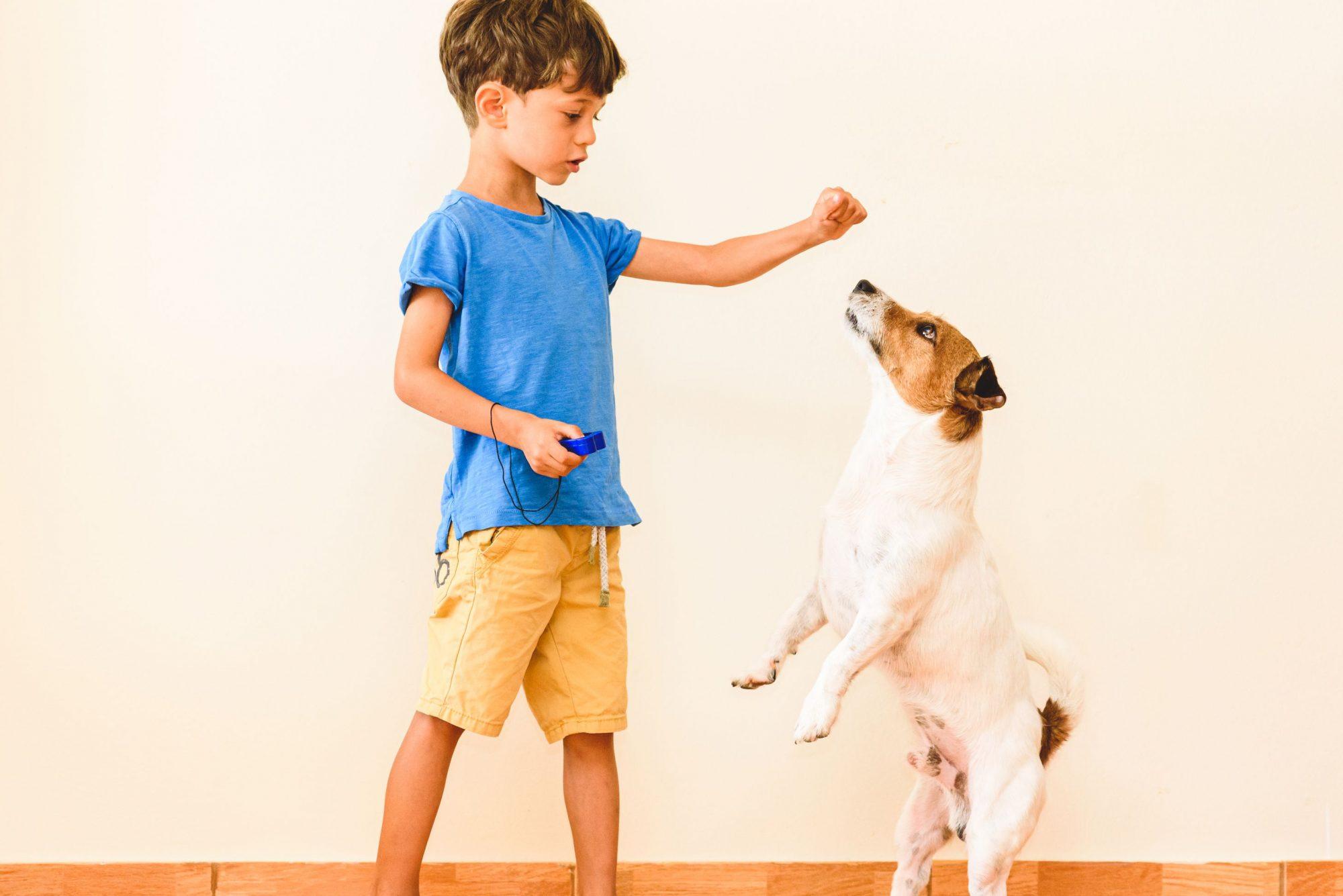 Beverly Hills, MI  dog clicker training.