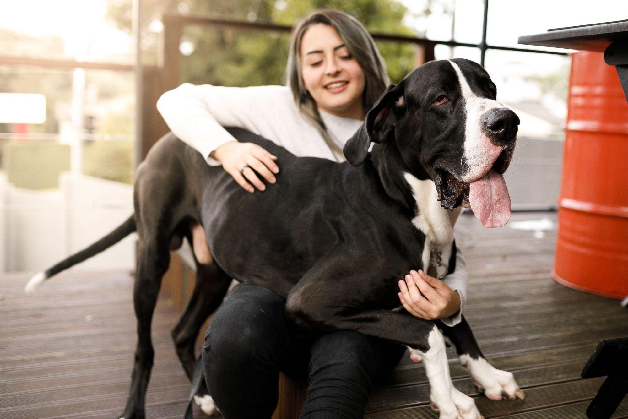 Large dog sitting on lap of owner.