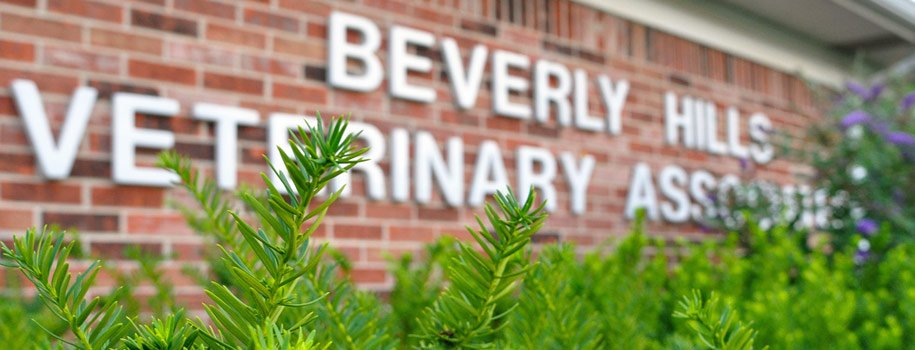 Beverly Hills Veterinary Associates